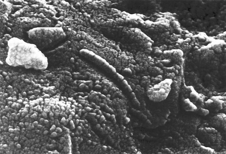 Allan Hills 84001 (ALH84001) meteorite structures
