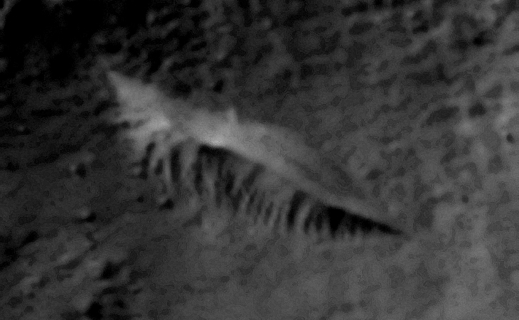 'Creature,' air-vent or dune?