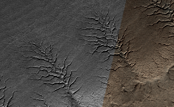 Is this evidence of plant life on Mars?